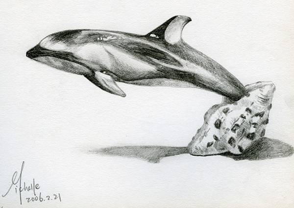 Dolphin Swimming Sketch Dolphin Swimming Out of