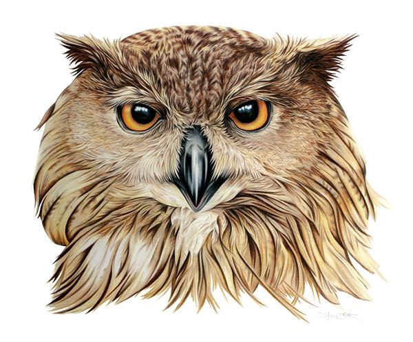 Wildlife Illustration On Behance