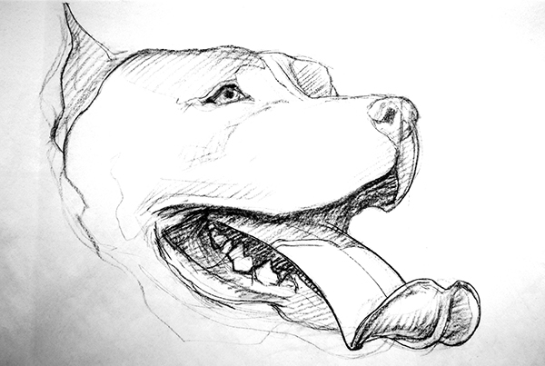 Big Drawings Of Big Dogs On Risd Portfolios