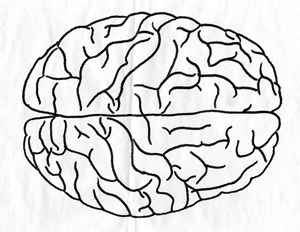 the gallery for gt brain outline drawing top view