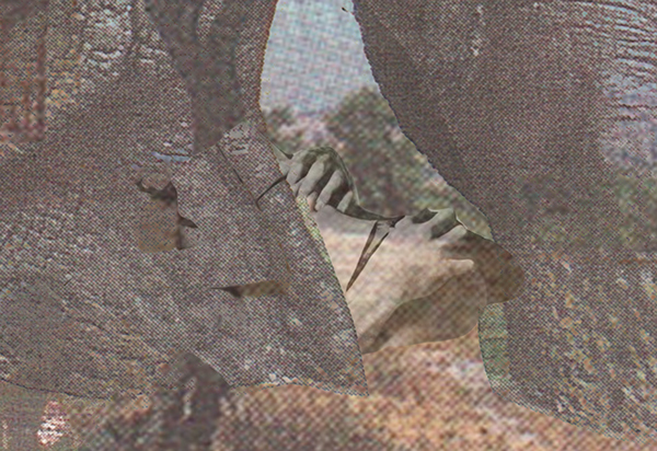 collage IN flagranti Cat palms sex