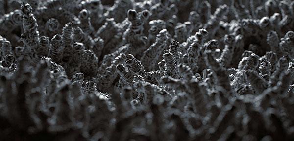 3D worm MAX corona Render macro grainy