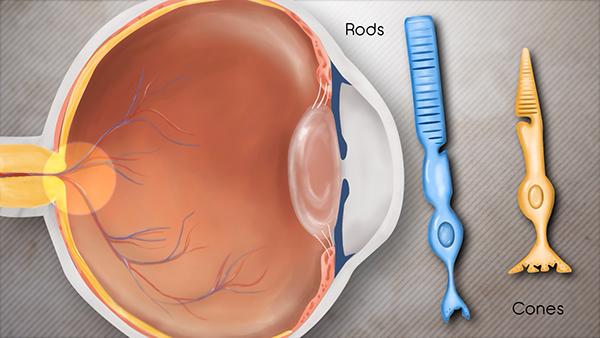 Presbyopia Animation On Behance