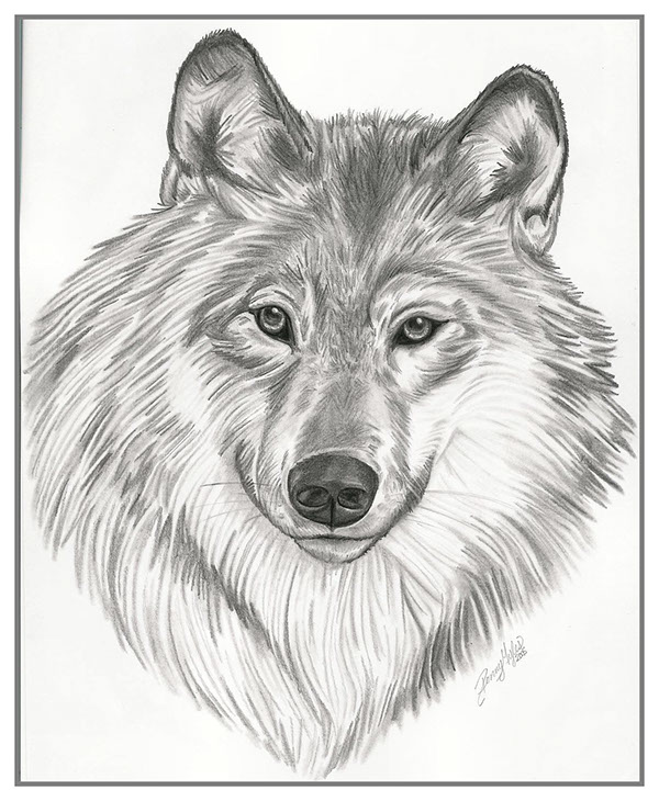 Drawings (Animals) on Behance