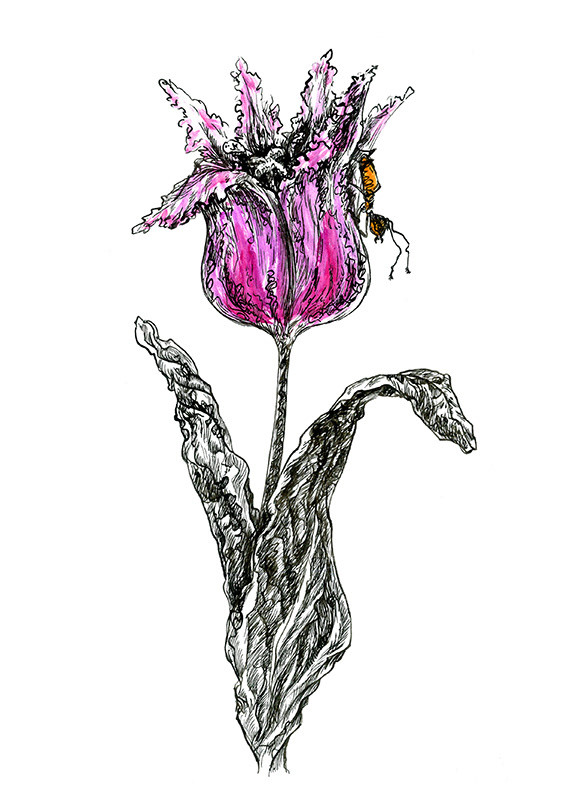 ink artwork tulip flower purple ant Drawing  ILLUSTRATION  watercolor Nature