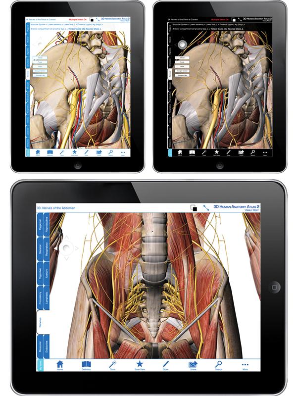 Ass anatomy digital art by leonardo balotelli