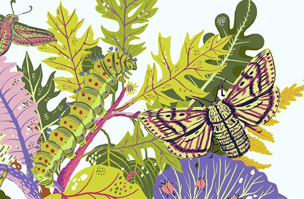 Illustrator,art,card,design,textile,graphic,Computer,plants,botany,science,Nature,natural,leaves