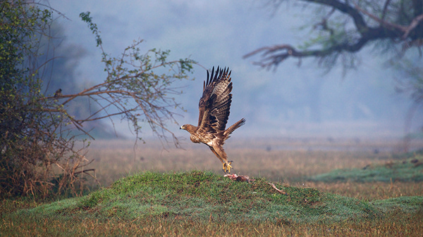 Wildlife - Keoladeo National Park