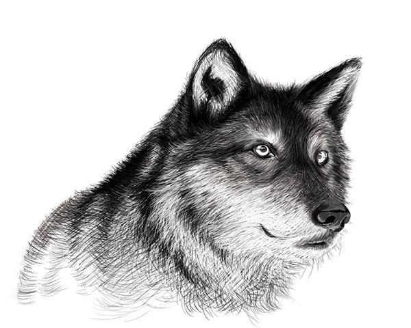 мороженое можно фото рисунок руками волк если речь