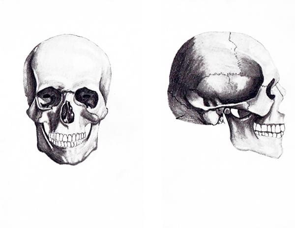 Human Anatomy Life Drawing On The Art Institutes Portfolios