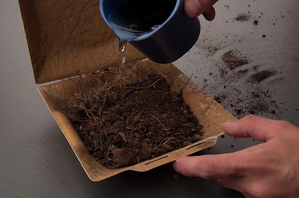Food  bowl disposable bio biodegradable environment environmental friendly eco Ecology paper save planet Plant