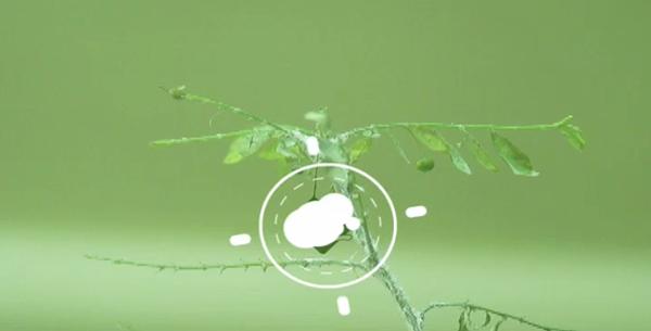 Mtv motion Nature design