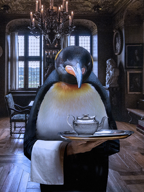 animal cruelty Biomodification Dark Fantasy penguin revenge Servitude