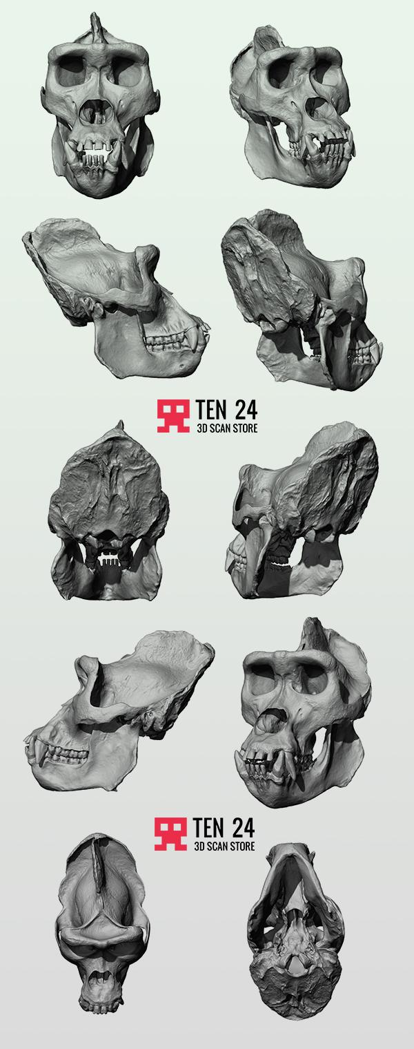 Gorilla Skull on Behance