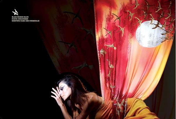 animals  catalog  fashion  Brochure design  ads  Indian fashion