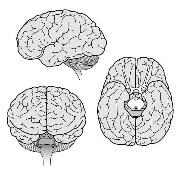 BRAINS! (cognitive neurosciences) on Behance