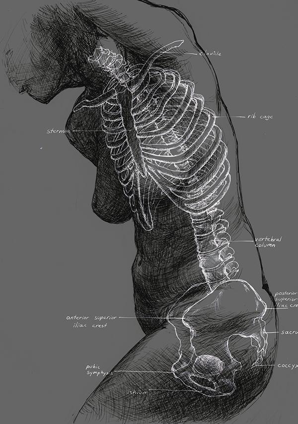Artistic Anatomy on RISD Portfolios