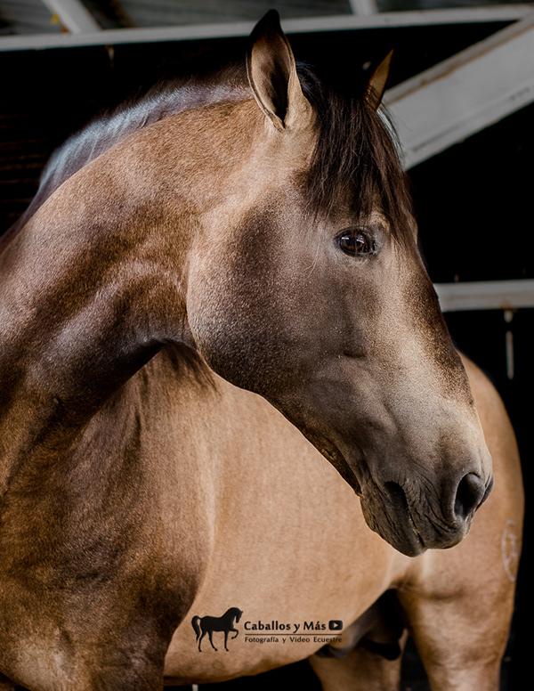 imperiosos salvatella fotografia para instagram de caballos y mas