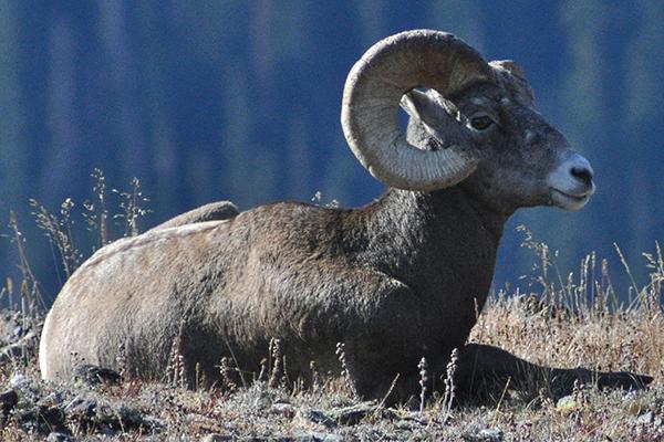 Rocky Mountain Natural History Association