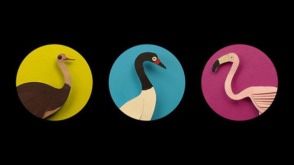 swan Elal patagonia