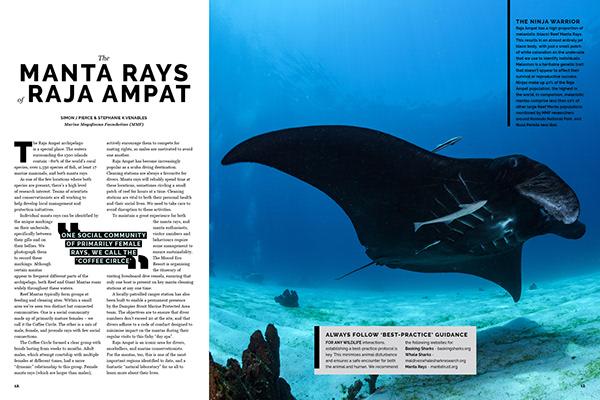 Magazine Design . The Shark Trust