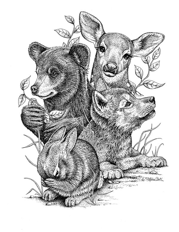 Line Drawings Of Woodland Animals : Pen and ink on behance