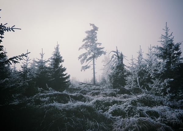Faded winter atmosphere Czech Nature