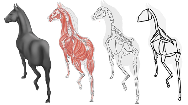 Horse Anatomy Study On Scad Portfolios