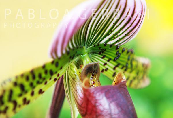 Nature landscapes Landscape digital Flowers photoshop photos photo