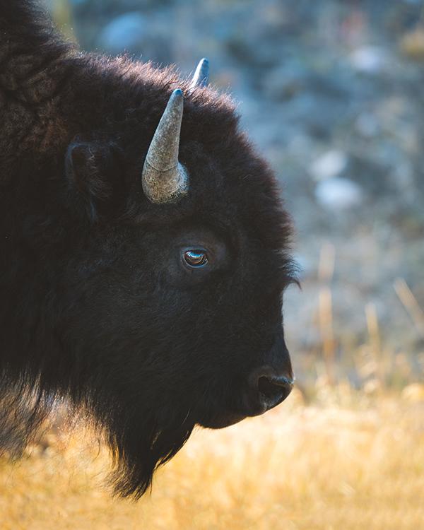 Fall in Wyoming // October 2020