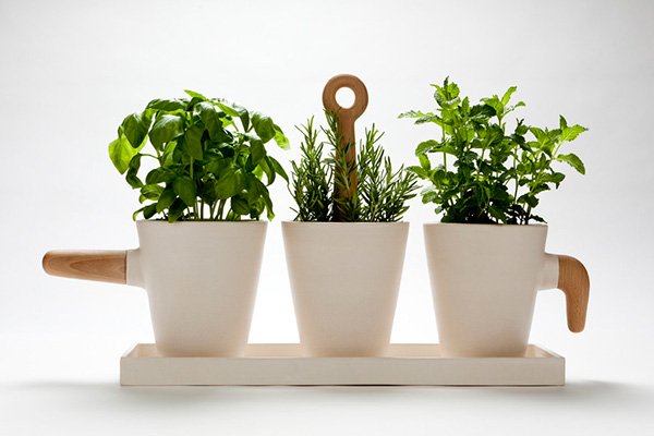Thanks - Aromatic herbs pots multiple benefits ...