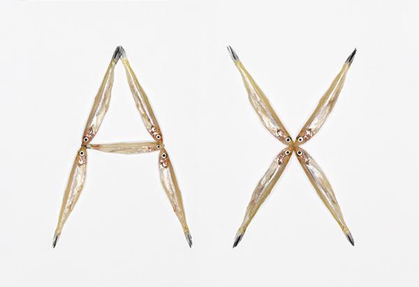 Typography fish,3D typography,font,letter,monique goossens,fish,animals,type,type letter,graphic,design,photograph,3D Type,handmade,Handmade Type
