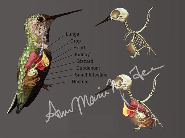 Medical Illustration On Behance