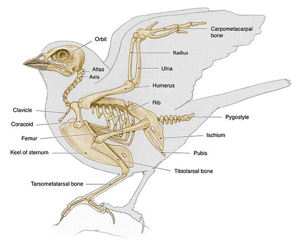 ba189624918795.5bab70f7d637f song sparrow on behance