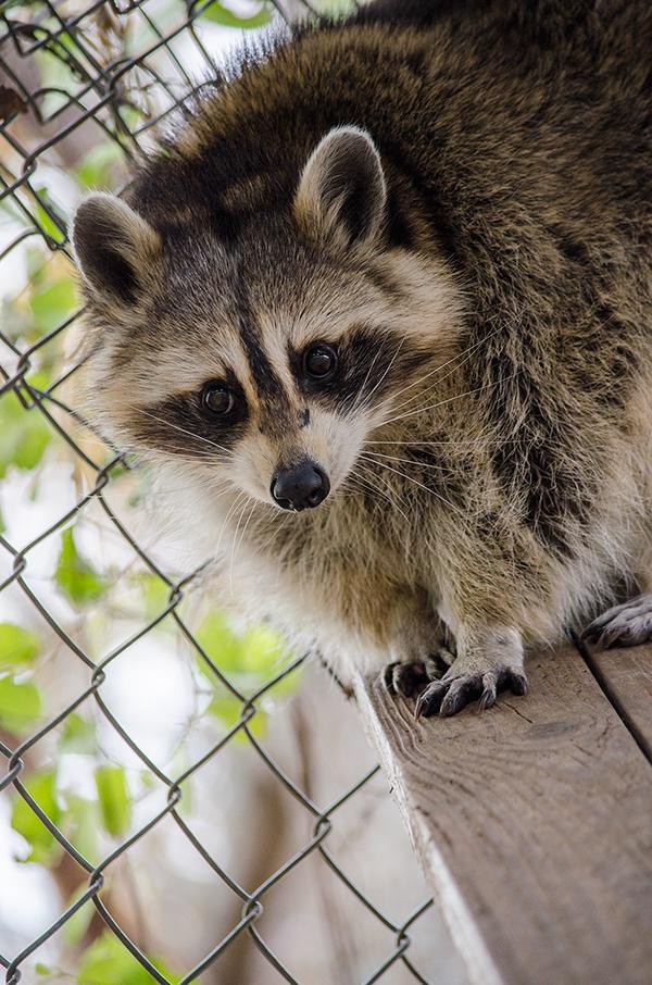 Ecology ecosystem charity biodiversity Documentary  Nature endangered nonprofit wildlife Tennessee