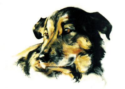 pastel,animal,dog, pet, chien, chat,natural,pencils,colored,charcoal,paint