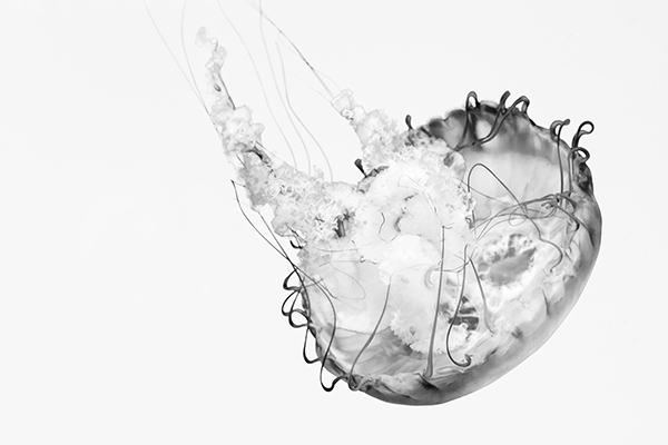 jellyfish Baltimore National Aquarium aquarium sea animal black and white jelly abstract