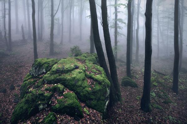 brothers grimm fairytale kilian schoenberger kilian schönberger winter autumn Magic   entchanted fog Mystic concept