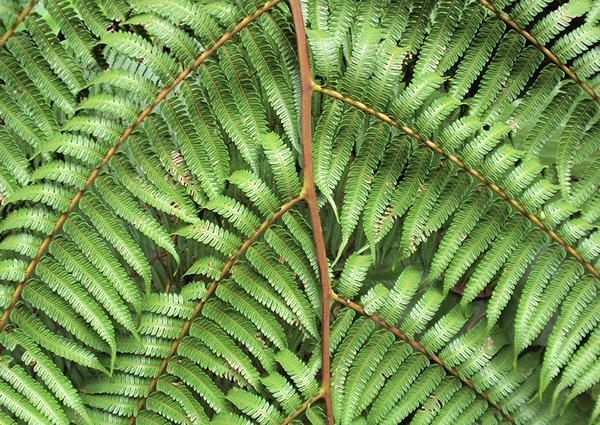 Else Kientzler Botanical garden Sarchí Costa Rica ecological photography Preserve Exotic plants