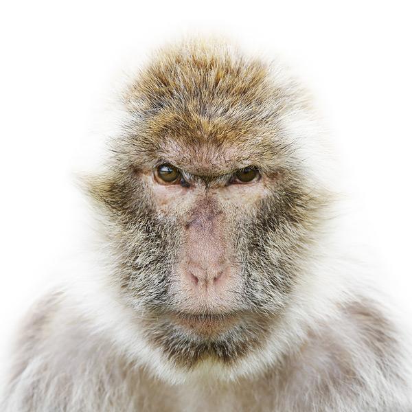 animal,portrait,faces,wildlife,Portraiture,Project,personal