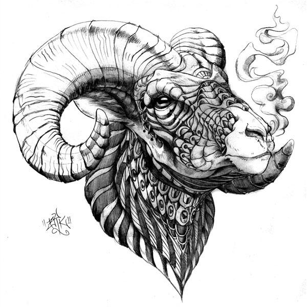 Sheep Horns Drawing Big Horn Sheep...565 x 900