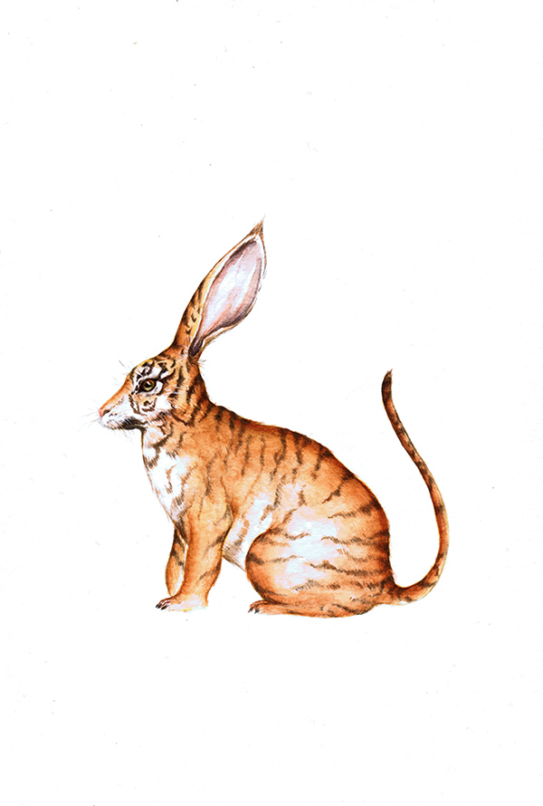 animal illustration watercolor