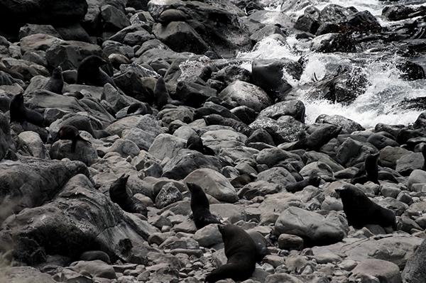 new-zealand black White Black&white black and white digital Landscape New Zealand Aoteroa