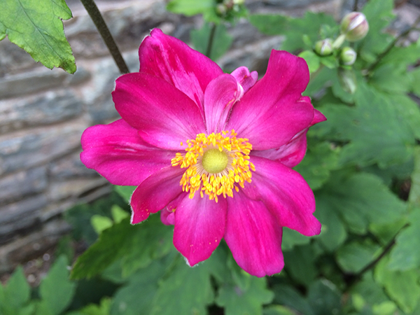 dingle flowers