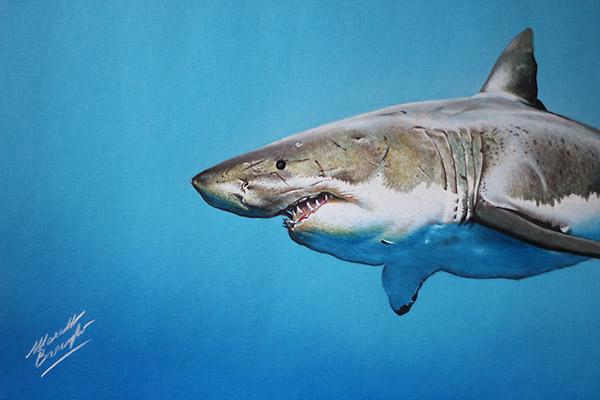 Cute Shark Drawing