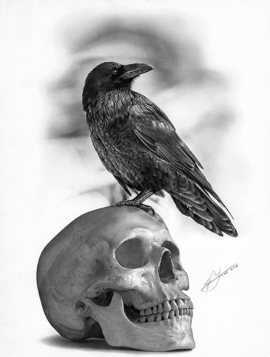 The Raven And The Skull Pencil Drawing By Julio Lucas On Behance