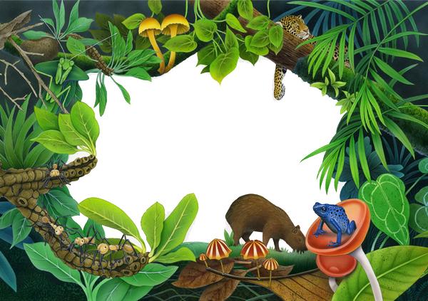 3d Theater Rainforest Book On Behance