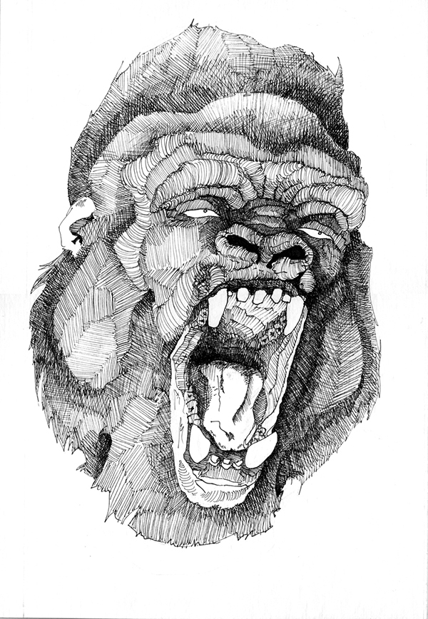 Gorilla Face Line Drawing : Angry gorilla drawing pictures to pin on pinterest daddy