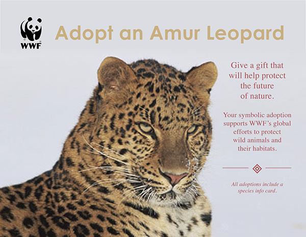 Wwf Adopt An Amur Leopard Flier Envelope On Behance