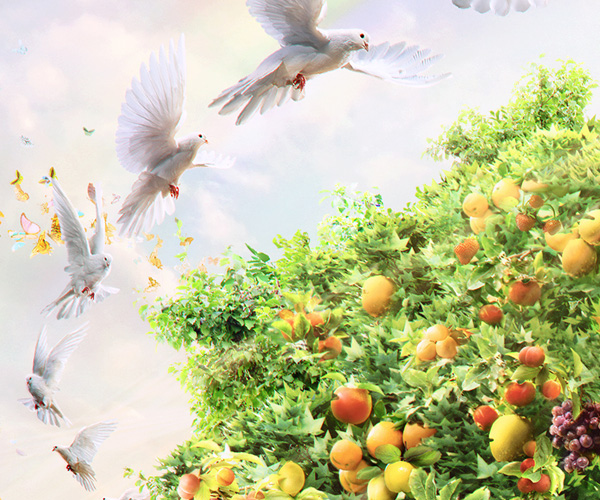 cappy ogilvy ars thanea arsthanea karol kolodzinski karol kołodziński paweł nolbert Nature plants Tree  drink fruits orange